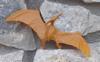 Invicta Pteranodon Dinosaur Toys