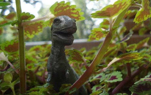 M-Rex-Garden3.jpg