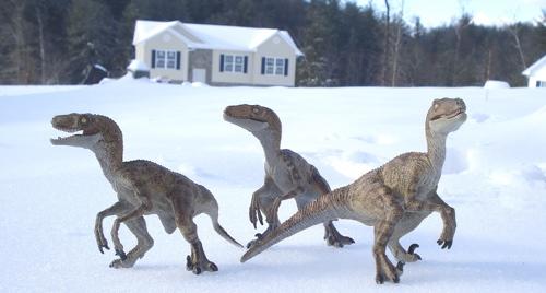 Velociraptor, Raptor, Papo Raptor, Papo Dinosaur Toys