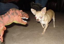 Carnivorous Dinosaurs Dinosaur Toys