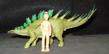 Safari Kentrosaurus, Dinosaur Toys