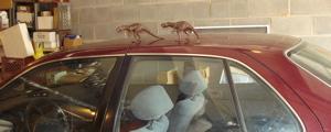Schleich Allosaurus Dinosaur Toys