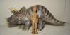 Schleich Triceratops Dinosaur Toys