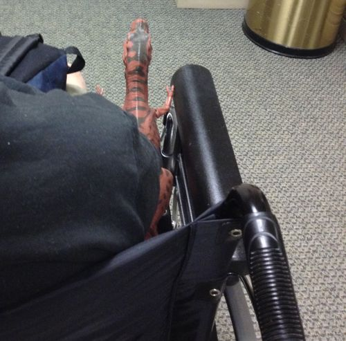 Rexford, Rexford Dinosaur, Wheel Chair, Dinosaur Toys