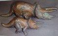 SRG Triceratops Dinosaur Toys